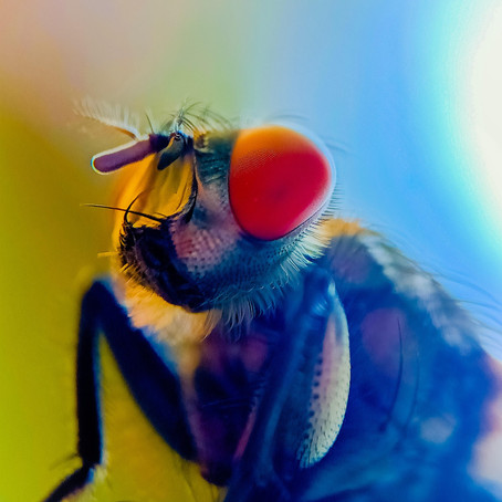 entomophile | Tanmoy Das
