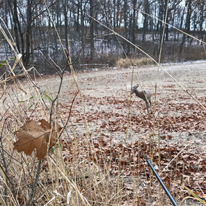 My First Deer Hunt - The Mental and Physical