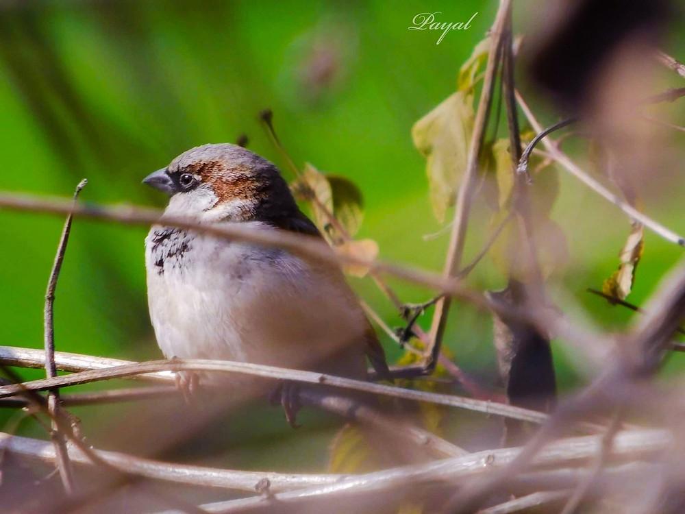Bengal bird photo nature online bengali magazine