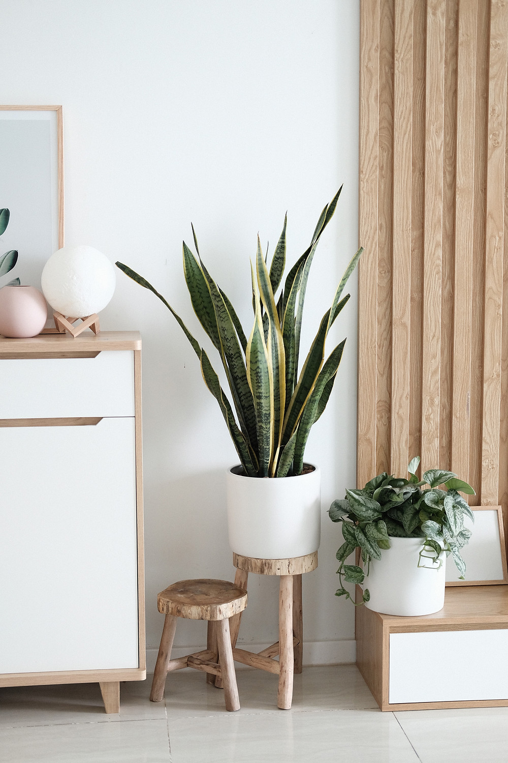 Plants in a bright living room