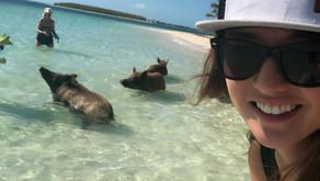 Piggy Ville in Bahamas