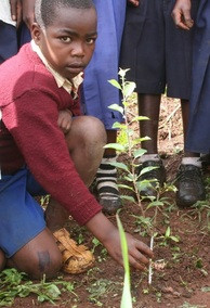 School Orchards in Africa