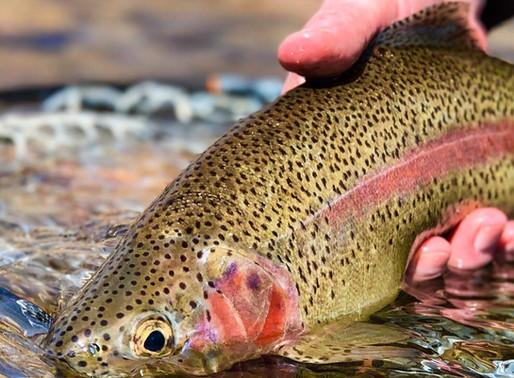 10/16/20 Fishing Report