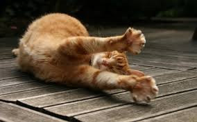PANDICULATION  the act of intuitive stretching