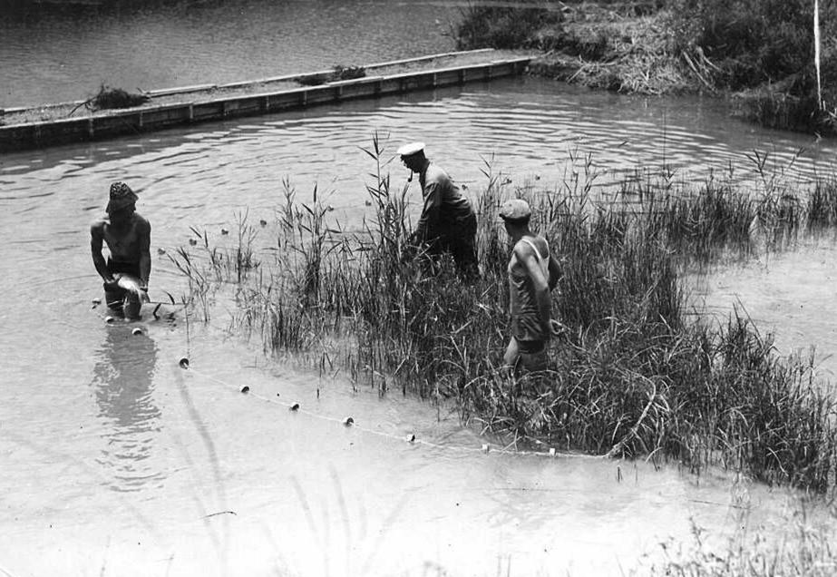 בריכת ניסיונית בנחל עמל, המשמשת לגידול דגי קרפיון. ניר דוד היא החלוצה הארצית בגידול מדגה (דגים בבריכות דגיןם)