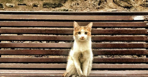 Me as Kedi on the Streets of Istanbul