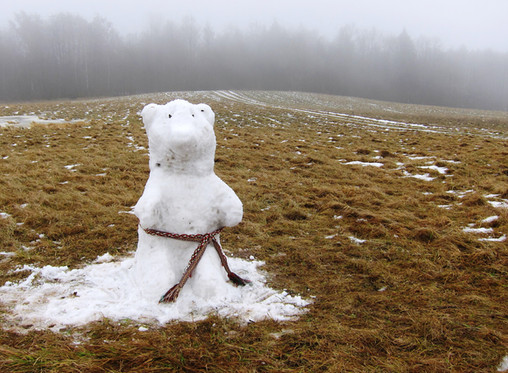 Meška verčia žiemą ant kito šono