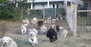 Man Adopts 45 Dogs and Sets Them Free on His 4 Acres of Enclosed Land