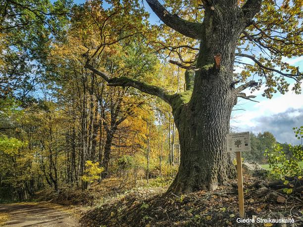 Per kiek daugiau nei du metus – ryškūs žingsniai medžių senolių apsaugoje
