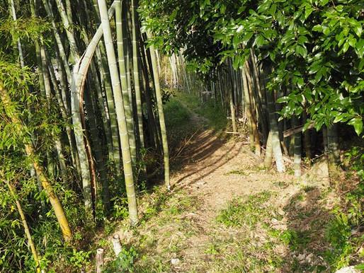 マインドフルウォーク 歩く冥想