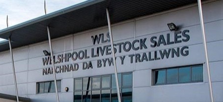 Entry forms now available for Welshpool sale