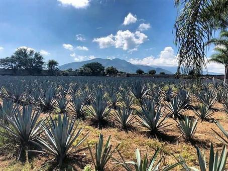 La exportación de tequila rompe récords