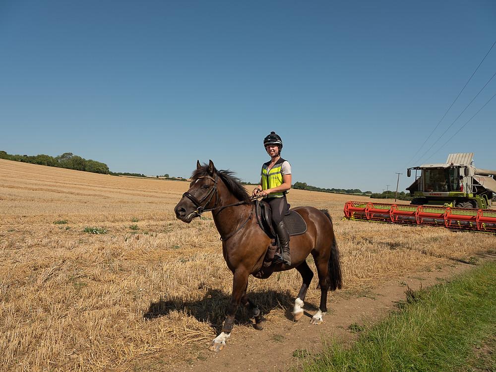horse rider in cornfield