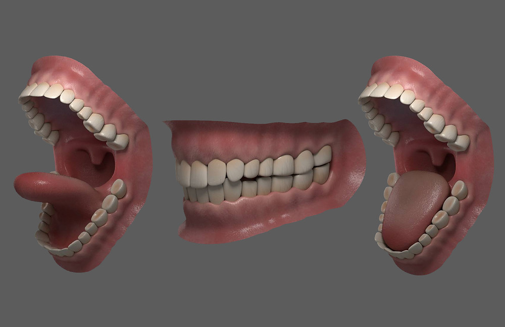 Combined Teeth and Grouped with Gums