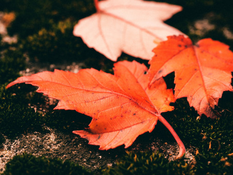 Was der Herbst für uns bereithält ...