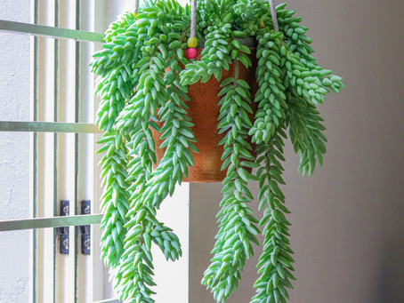 Hanging Plants add a burst of life to your home!