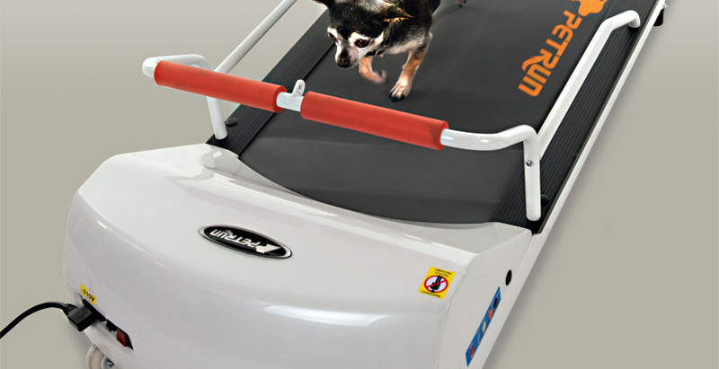The GoPet PetRun PR700 TreadMill Helps to Keep Your Pups Fit