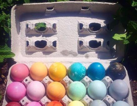 'Green' Eggs