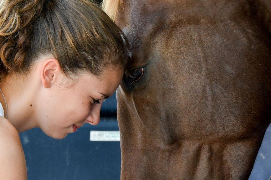 Pegase Insurance Communication intuitive animale connexion cavalier cheval