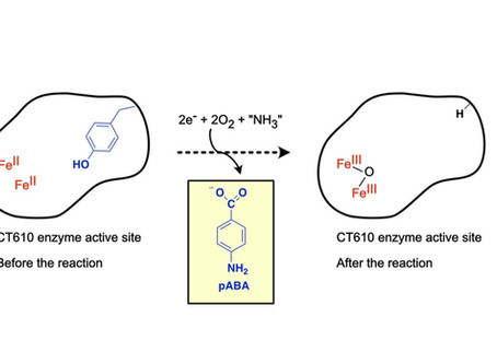 Check out our work on a suicide diiron oxygenase!
