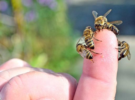 Sanftmütige Bienen - das wichtigste Ziel?