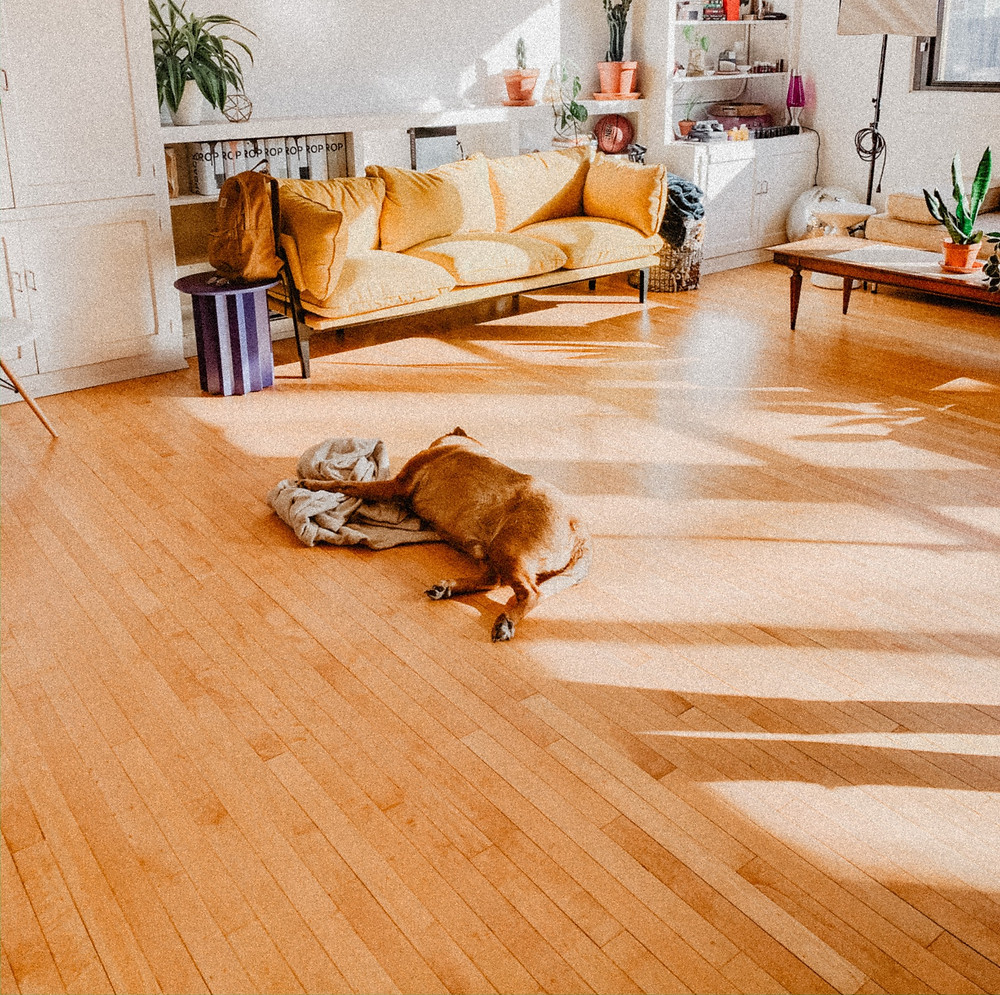 Dog on Slippery hardwood floor