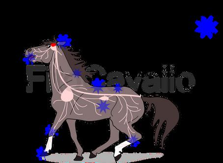 Fájdalom menedzsment és fájdalomarc a lovaknál