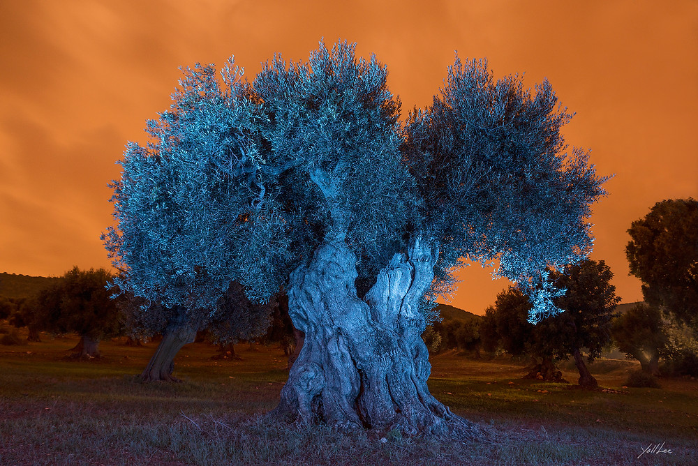 Orange sky with blue olive tree  138x93cm 10 limited edition hahnemuhle Baryta FB, pigment ink-jet print