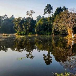 Dehing Patkai: India's last lowland rainforest or a coalmine?