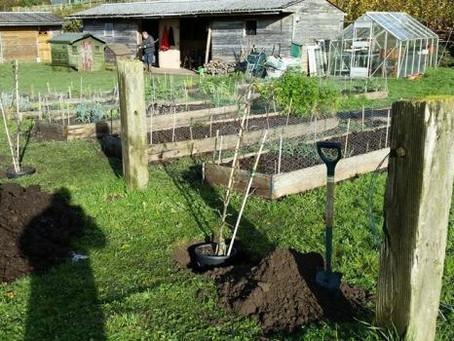 Home-Grown Seeks to Grow