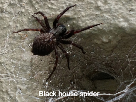 Web-building spiders v hunting spiders (what's the difference and why does it matter?)