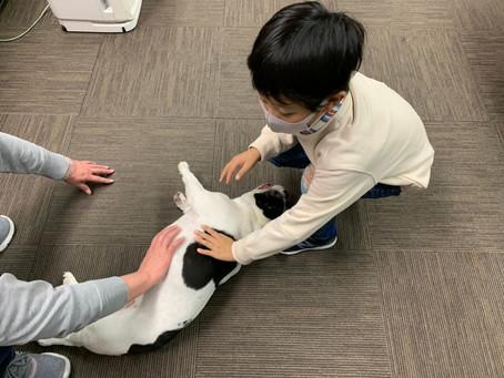 我社の看板犬【ぶんたちゃん】