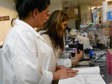Análisis de semillas de Theobroma bicolor