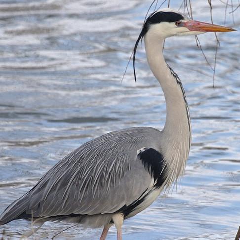 Crédits biodiversité, évolution fiscale : les économistes veulent  protéger le vivant