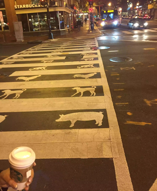 Chinese Zodiac themed crosswalk In Chinatown, Washington, DC