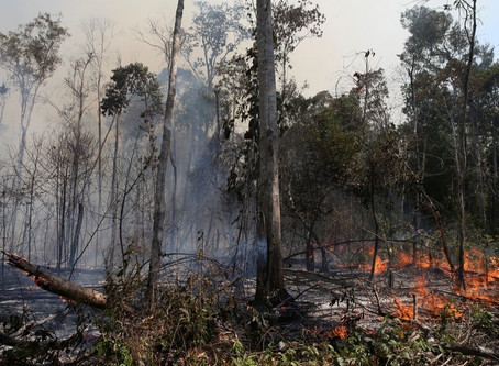 Fires intensified by global warming may destroy 16% of the Amazon
