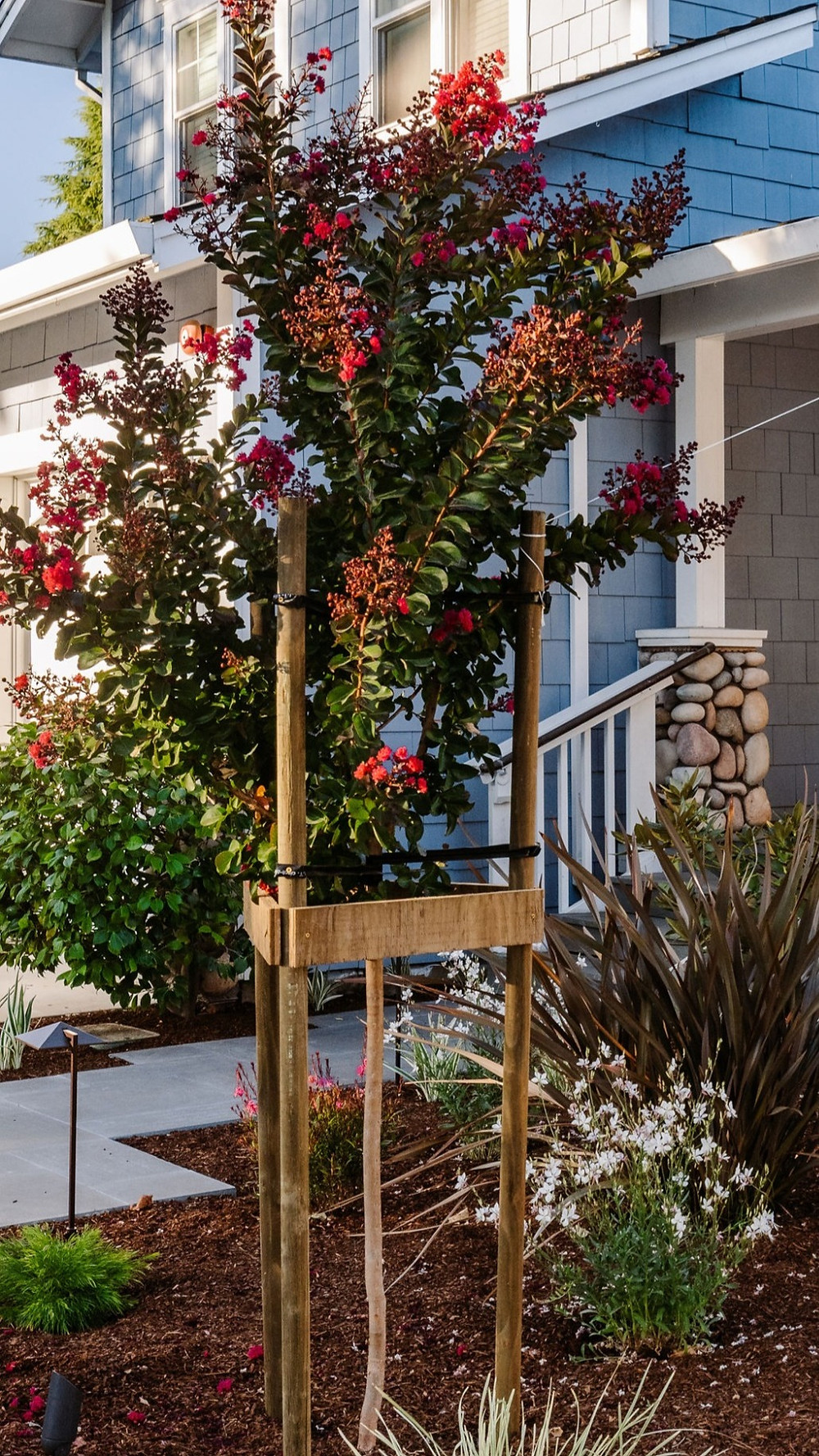 tree staking crape myrtle tree supports