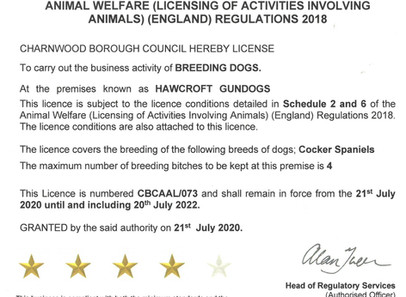 Animal Activity Licence