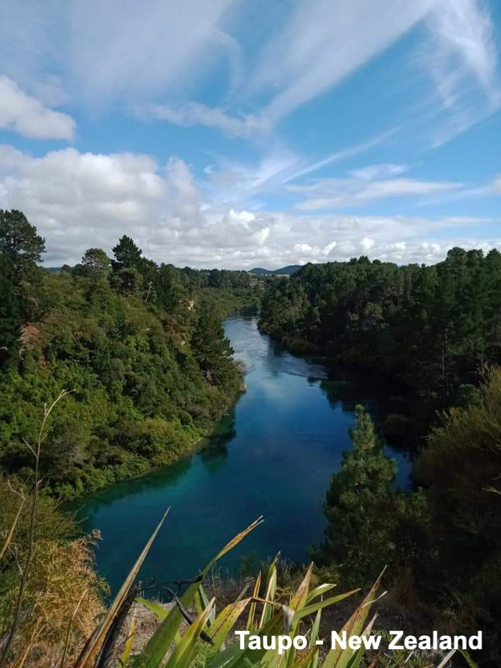 A river surrounded my trees in Taupo New Zealand
