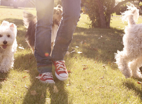 Top 7 Tips for introducing your dog to others