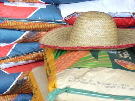 Município entrega milho no interior nesta quarta e quinta-feira