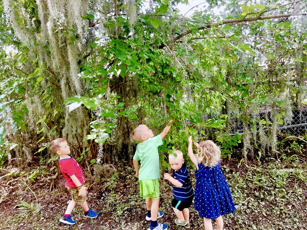 Four young children picking mulberries off a tree