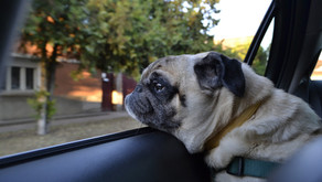4 Ways to Avoid Spending an Arm and a Paw on Pup-Friendly Summer Travels