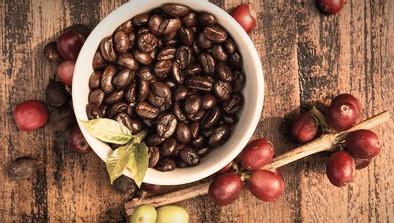 Fruto del café y sus granos, El Rollo Verde