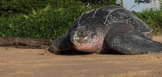 Design Blog: Crate Turtle - Slow, Resilient, Massive