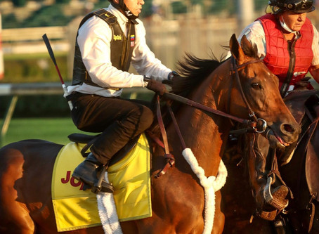 King Guillermo: Longshot with Kentucky Derby Dreams