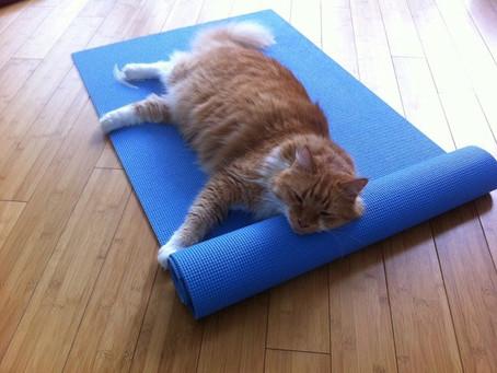 Les plus belles excuses «en carton»      pour ne pas se mettre au yoga !!!