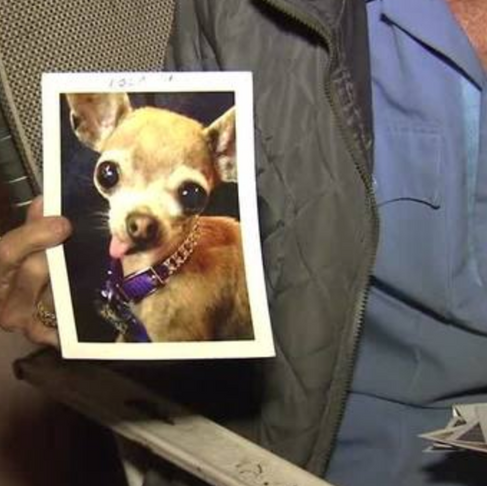 93-Year-Old WWII Vet Reunited with his Stolen Pup