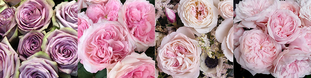 From left: Tiara, Pink Fragrance, Keira and Tsumugi