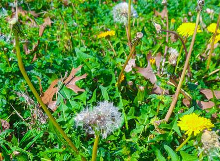 Confusing Weeds!!